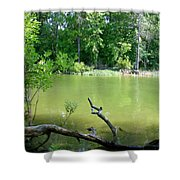 1246c1 Shower Curtain