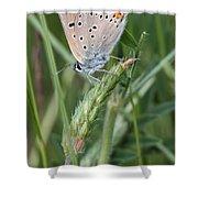 13 Balkan Copper Butterfly Shower Curtain
