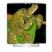 Eyelash Viper Shower Curtain
