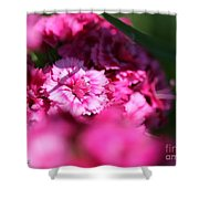 Sweet William From The Super Duplex Bluepoint Mix Shower Curtain