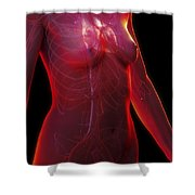 The Cardiovascular System Female Shower Curtain