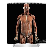 The Muscle System Shower Curtain