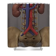 The Renal System Shower Curtain