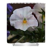 Viola Tricolor Heartsease Shower Curtain