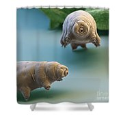 Water Bear Shower Curtain by Eye of Science and Science Source