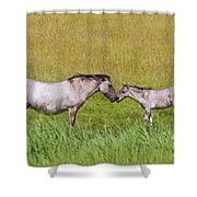 130201p027 Shower Curtain
