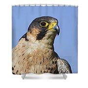 130201p040 Shower Curtain