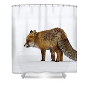 130201p056 Shower Curtain