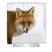 130201p058 Shower Curtain