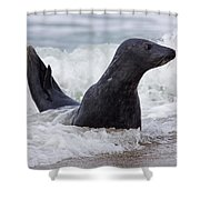 130201p124 Shower Curtain