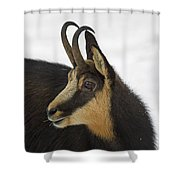 130201p201 Shower Curtain