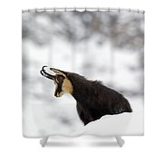 130201p229 Shower Curtain