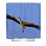 130201p265 Shower Curtain