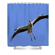 130201p267 Shower Curtain