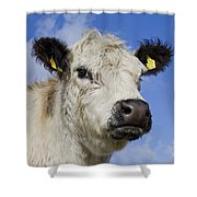 130201p275 Shower Curtain