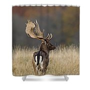 130201p288 Shower Curtain