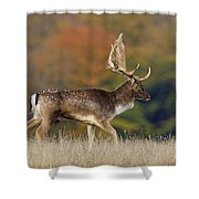 130201p289 Shower Curtain