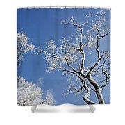 130201p336 Shower Curtain