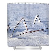 130201p362 Shower Curtain