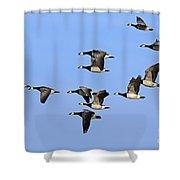 130215p251 Shower Curtain