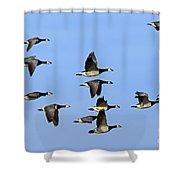 130215p252 Shower Curtain
