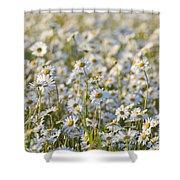 130215p281 Shower Curtain