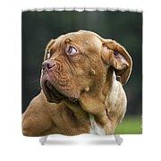 130318p080 Shower Curtain