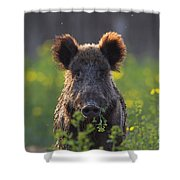 130901p341 Shower Curtain