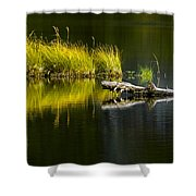131005b-029 Forest Pond 2 Shower Curtain