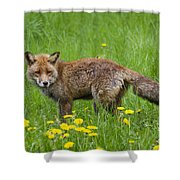 131018p150 Shower Curtain