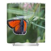 14 Balkan Copper Butterfly Shower Curtain