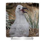Black-browed Albatross Shower Curtain