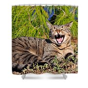 Cat In Hydra Island Shower Curtain