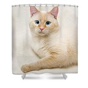 Flame Point Siamese Cat Shower Curtain