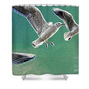 10760 Seagulls In Flight #001 Photo Painting Shower Curtain