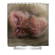 Snow Monkey, Japan Shower Curtain