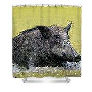140530p337 Shower Curtain