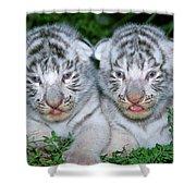 Tigre Blanc Panthera Tigris Shower Curtain