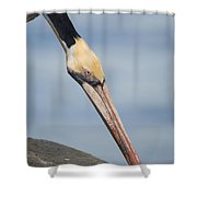 Brown Pelican Shower Curtain