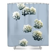 Lymphocytes Undergoing Apoptosis Shower Curtain