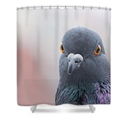Rock Dove Shower Curtain