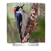Birds Of The World Shower Curtain