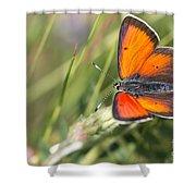 17 Balkan Copper Butterfly Shower Curtain