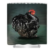 17. Black Frizzle Cochin Bantam Shower Curtain