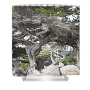 17 Mile Drive Tree Shower Curtain