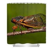 17-year Periodical Cicada I Shower Curtain