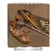 17-year Periodical Cicada II Shower Curtain