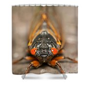 17-year Periodical Cicada IIi Shower Curtain
