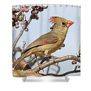 Birds Of The World Shower Curtain