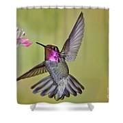 Annas Hummingbird Shower Curtain